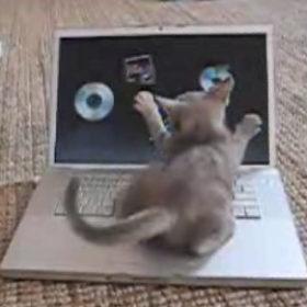 Kitty Mac Atttack!
