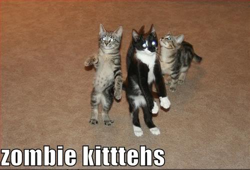 Zombie kitties- Maybe not the best audience for DOGCAST!, then again you never know.